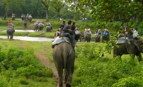 Chitawan Jungle safari